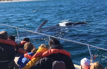 Na Estrada: <br>baleias em Chubut
