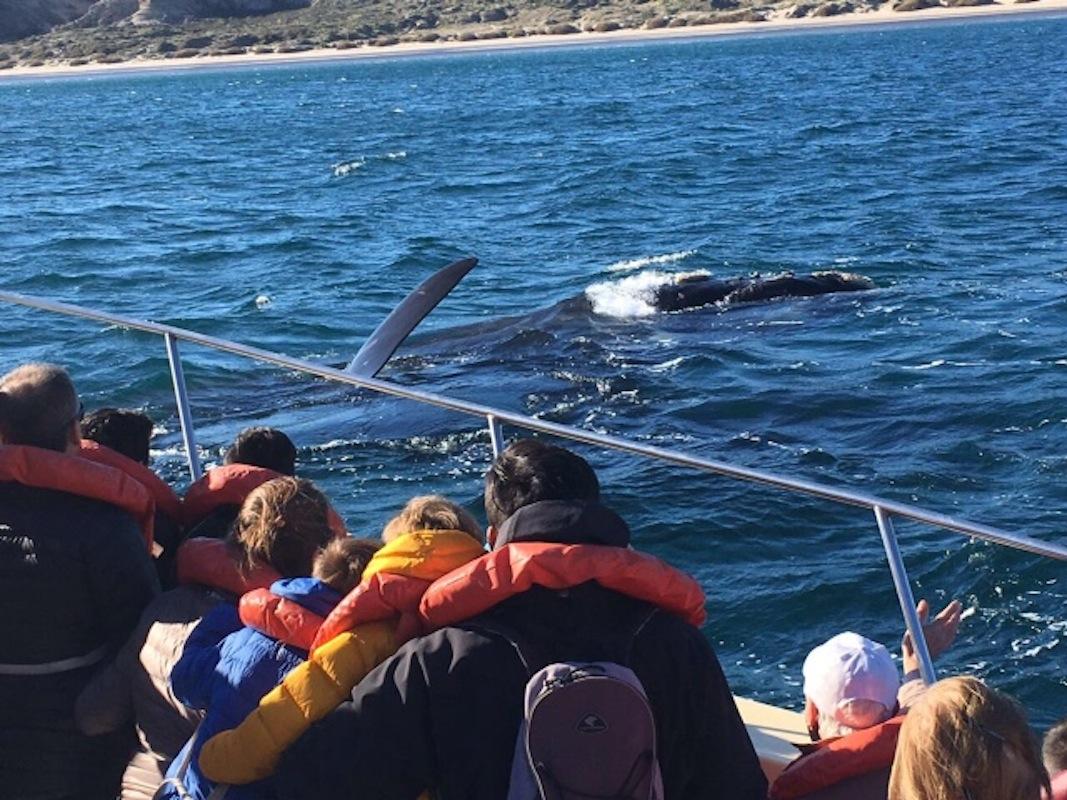 Baleias em Chubut